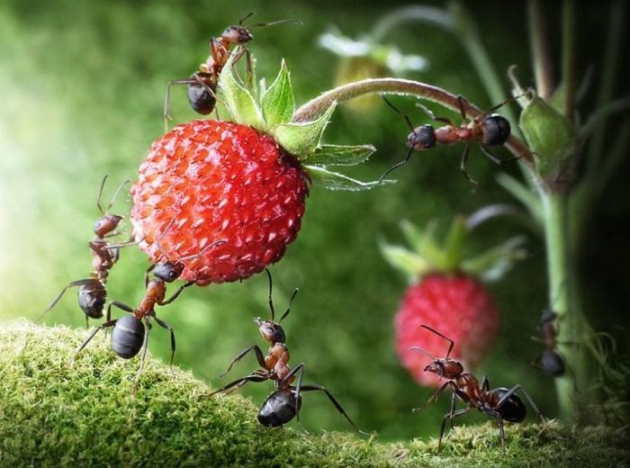 100% метод против муравьев. Секрет агронома