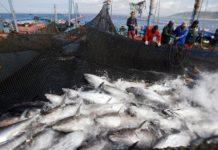 80 новых судов для рыболовного флота