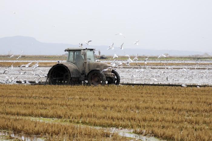 трактор в рисовом поле