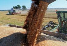 Бразилия впервые за восемь лет закупила пшеницу в России