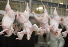 ЕС запретил ввоз мяса птицы со всех российских предприятий