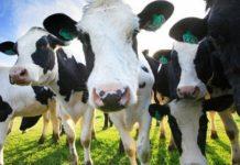 ФТС обеспокоена льготами на импорт племенных животных