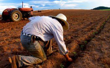 Фермеры Западной Австралии намерены перенять опыт производства зерна в Краснодарском крае