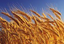 Фонд экономической поддержки казачьих сельхозкооперативов предложили создать на Кубани