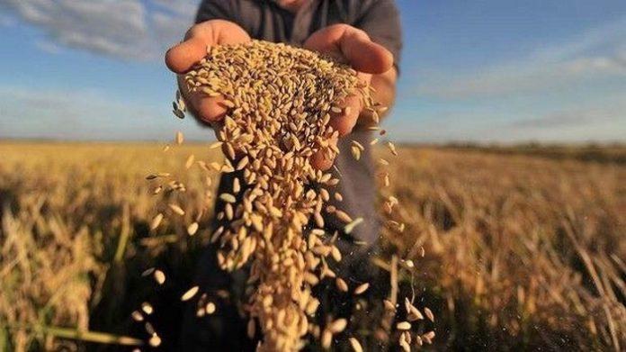 И снова новые данные по урожаю зерна