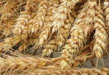 Экспортные цены на пшеницу резко пошли вверх