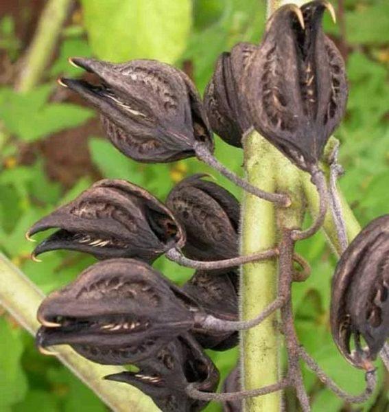 Это растение избавит вас от тли на участке. Секрет агронома.