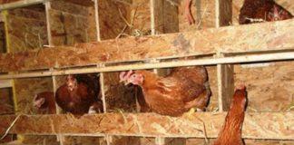 Как построить птичник на дачном участке своими руками