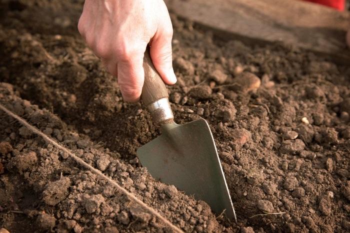 Как вырастить капусту без рассады в июне