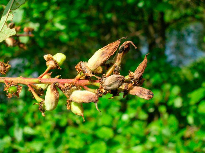 Кармашки цветков и плодов