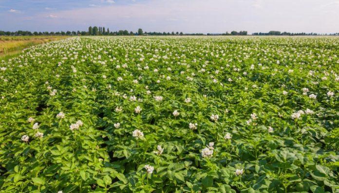 Лишь 20% сельхозземель в России поставлены на кадастровый учет