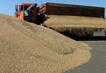 Минсельхоз РКрекомендовал аграриям выбирать крымские семена дляозимых