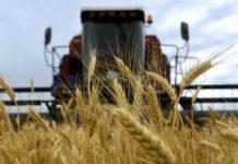 Минсельхоз США: Россия заняла первое место вмире поэкспорту пшеницы