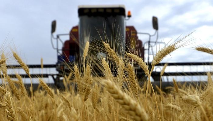 Photo of Минсельхоз США: Россия заняла первое место вмире поэкспорту пшеницы