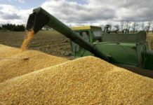 Минсельхоз подготовит новую доктрину продовольственной безопасности