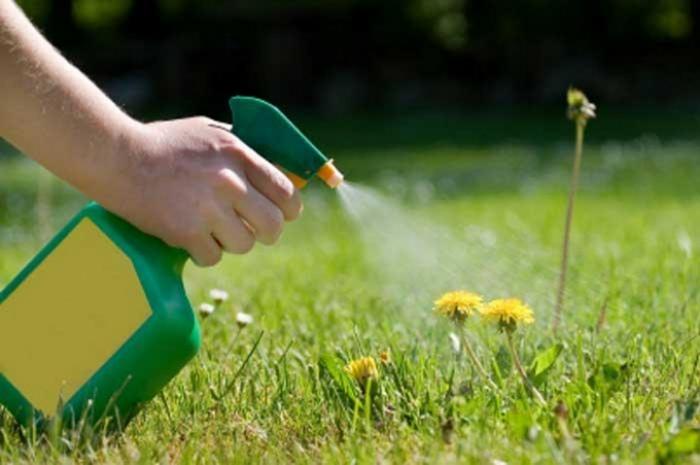 Народный метод борьбы с сорняками на вашем участке