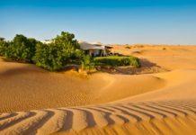 ОАЭ займутся превращением пустынь в сельхозугодья