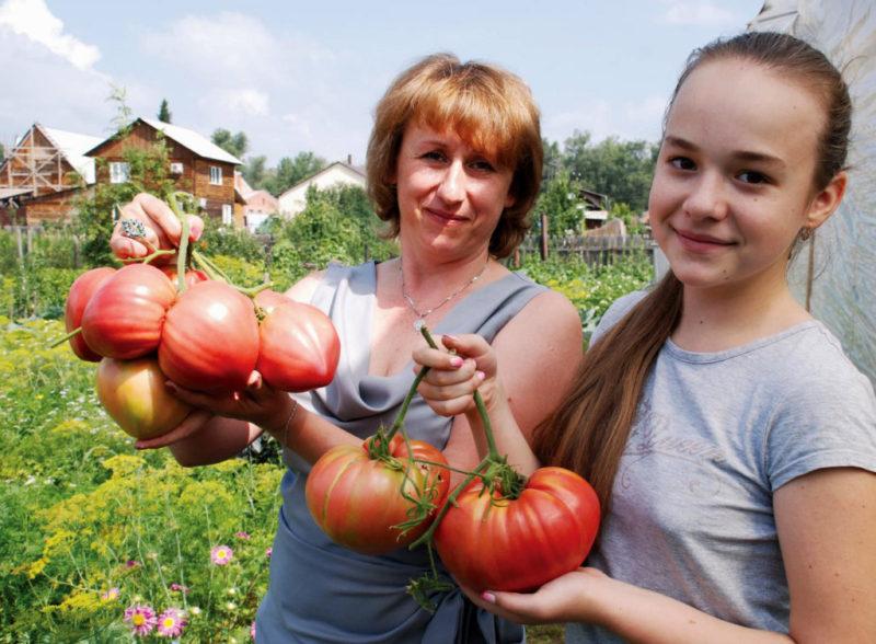 Огромные помидоры в 2 шага