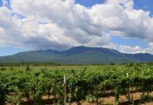 Организация агрострахования в Республике Крым требует особого подхода
