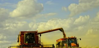 Первые результаты уборочной - снижение урожайности в 10 из 14 регионов, начавших полевые работы