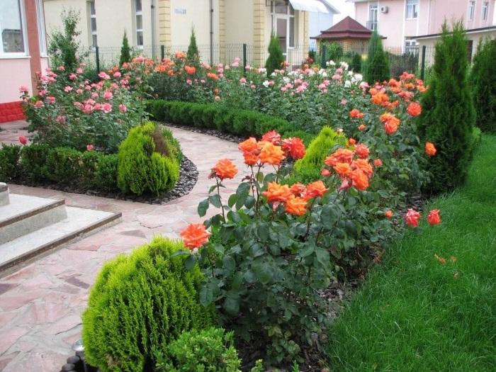 Практические советы любителям роз. Секреты цветовода