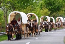 Проект «Титаны на скаковой дорожке» отправляется на запряженных тяжеловозами повозках в Восточную Европу