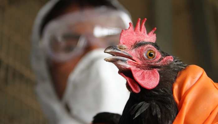Птичий грипп зафиксирован в Татарстане