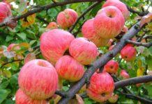 РФ в январе-мае снизила импорт мяса, резко увеличила яблок и пальмового масла