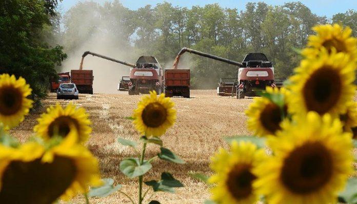 Рекордного урожая не будет без дождей