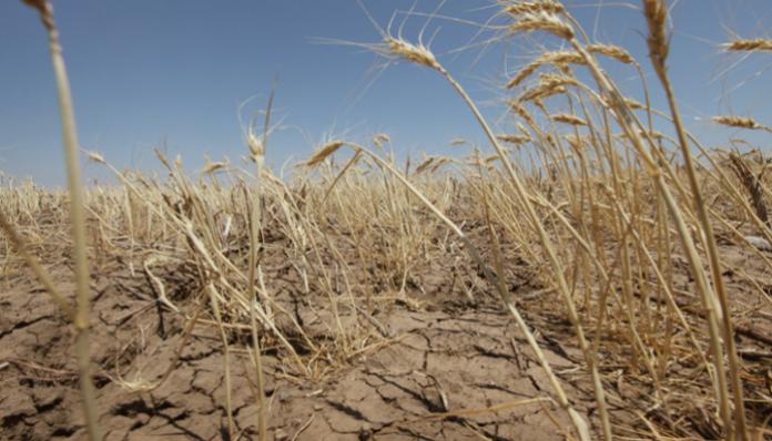 Режим чрезвычайной ситуации объявлен в Волгоградской области из-за засухи