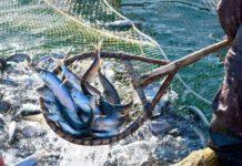 Росрыболовство намерено возродить государственные рыбные магазины