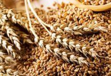 Россия начала экспортировать зерно нового урожая