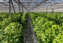 """""""СБ-Агро"""" к 2021г построит в Адыгее комплекс по выращиванию и упаковке овощей за 500 млн руб"""