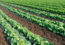 Сельхозпроизводство в Свердловской области в I полугодии выросло на 3,3%