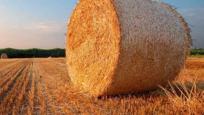 Сельское хозяйство - драйвер экономики России