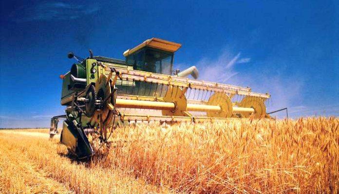 Спасти рядового агрария: как крымчанам компенсируют ущерб от засухи