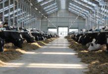 """""""Тюменские молочные фермы"""" станут крупнейшим производителем молока в России"""