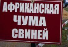 Три новых очага АЧС выявили в Калининградской области