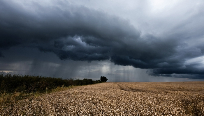 В Белгородской области подсчитывают убытки аграриев из-за дождей