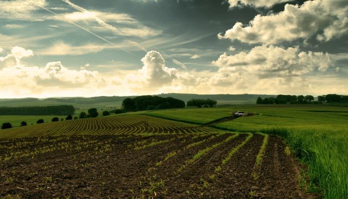 В Костромской области фермерам бесплатно будут выдавать 700 га земли