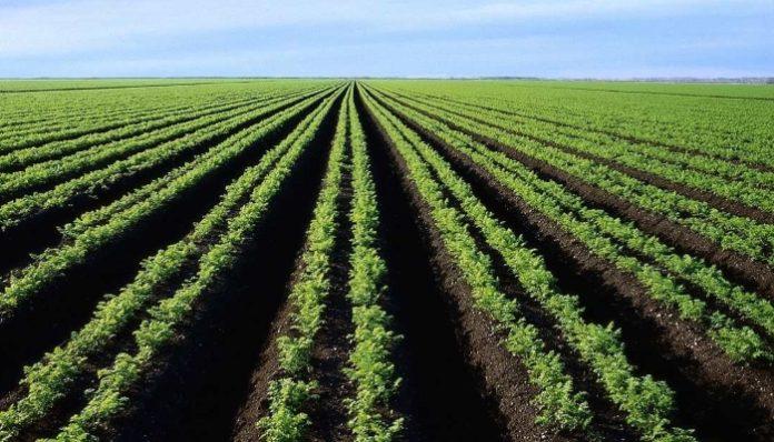 В Нижегородской области развитие сельских территорий может быть выделено в особый раздел