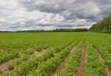 Животноводство и растениеводство попадут в патентную систему налогообложения