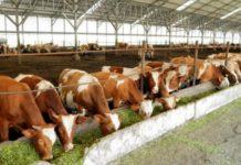 Животноводство в Вологодской области теснит овощеводство