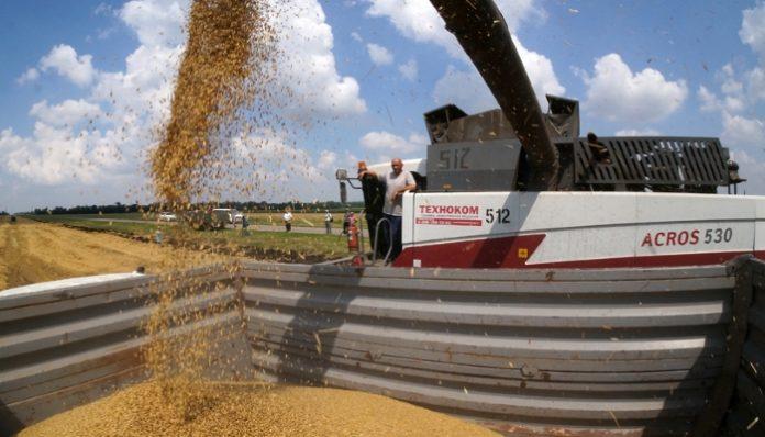 Аграрии Волгоградской области из-за непогоды ожидают снижения урожая зерна в 1,6 раза