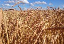 Агрохолдинг «Степь» хочет войти в пятерку поставщиков зерна