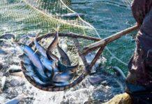 Анонсирована программа Международного рыбопромышленного форума в Петербурге