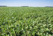 Аргентинские фермеры изучили подход АгроТерры к производству сои