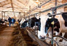 Башкортостан: Производители молока получат 185 млн рублей дополнительной поддержки из республиканского бюджета