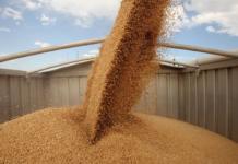Цены на пшеницу закипают от жары