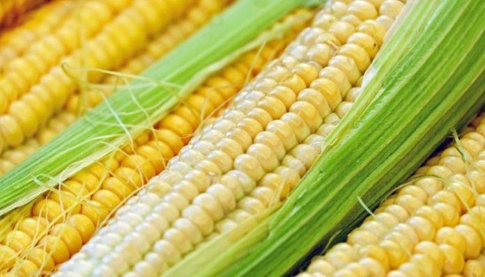 DEKALB выводит на рынок новые продукты в технологии возделывания кукурузы